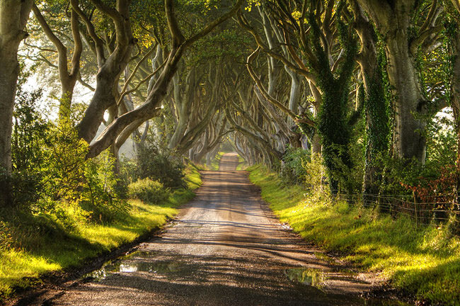 Dark Hedges along Bregagh Road in Northern Ireland