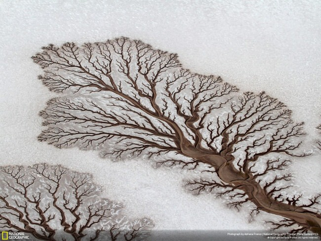 Tree-like rivers in Baja California Desert