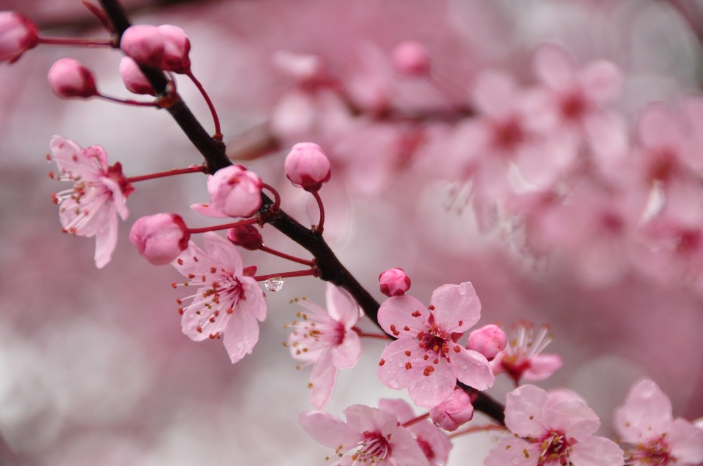 These small flowers are insanely beautiful 50 photos pink cherry blossom mightylinksfo Gallery