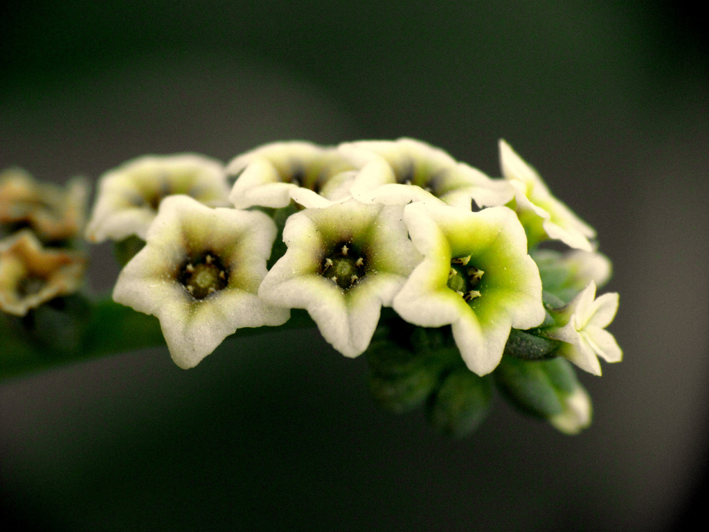 These small flowers are insanely beautiful 50 photos wild little beauty izmirmasajfo
