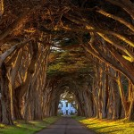 Incredibly Fascinating Tree Tunnels You Definetely Need to Visit