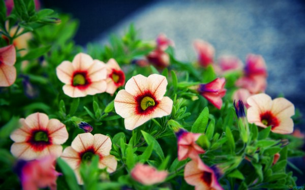 these small flowers are insanely beautiful  photos, Beautiful flower
