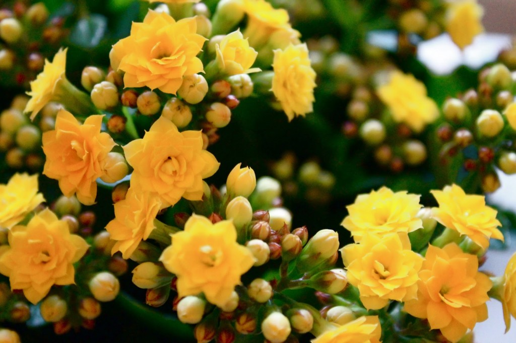 These small flowers are insanely beautiful 50 photos small flowers mightylinksfo Choice Image