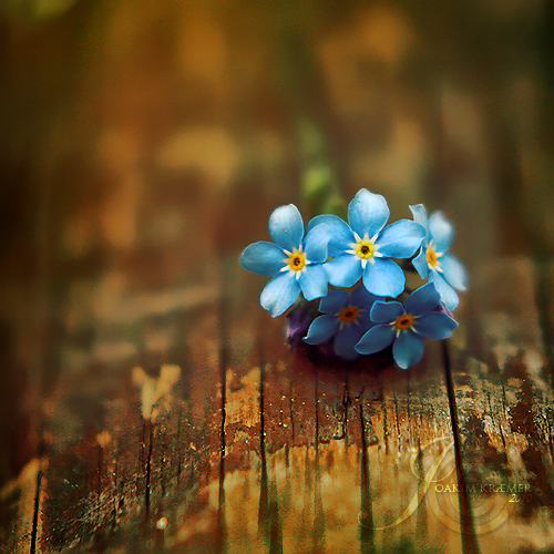 These Small Flowers Are Insanely Beautiful 50 Photos
