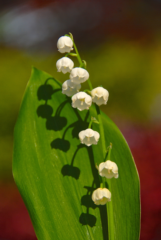 These small flowers are insanely beautiful 50 photos small white flowers mightylinksfo Choice Image