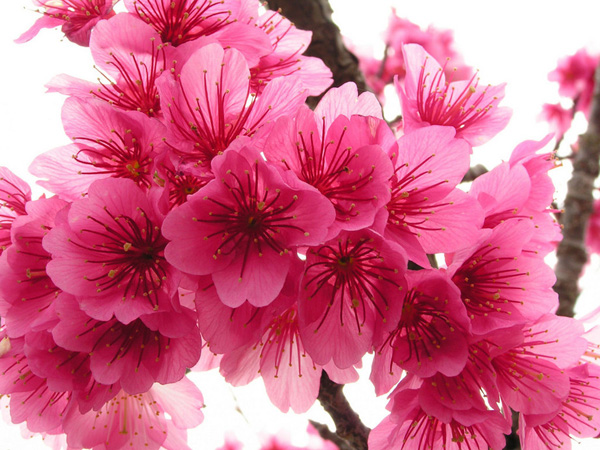These small flowers are insanely beautiful 50 photos small pink flowers mightylinksfo