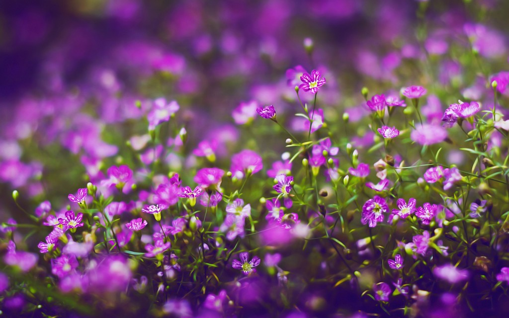 These Small Flowers Are Insanely Beautiful (50 PHOTOS)