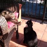 What This Cat Did is Not Cool At All (VIDEO)