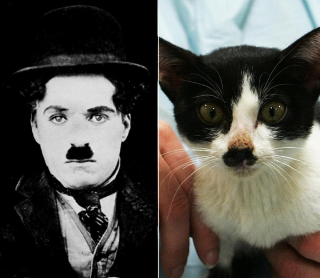 Famous People Who Look Like Cats