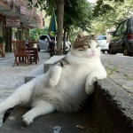 21 Cats Who Learned How To Sit Like a Human