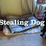 Hilarious Compilation of Cats Stealing Dog Beds (Video)