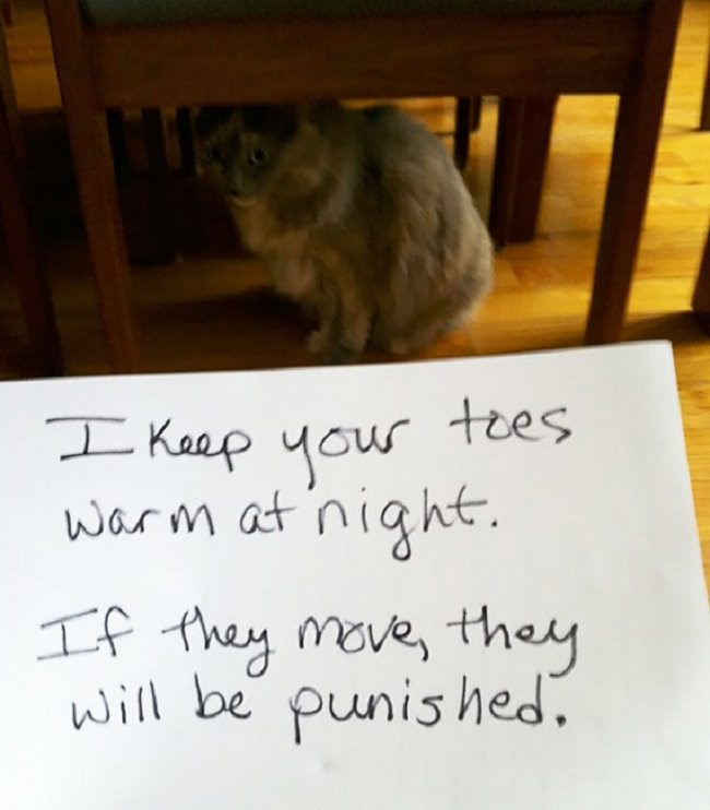 17 bad cats youll lol when you find out what they did