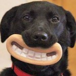 14 Dogs That Have No Clue How Funny They Look With Their Toys