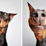 Shelter Photo-booth Pics Help Dogs Find a Family