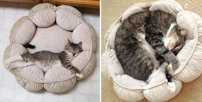 before-and-after-growing-up-cats-3