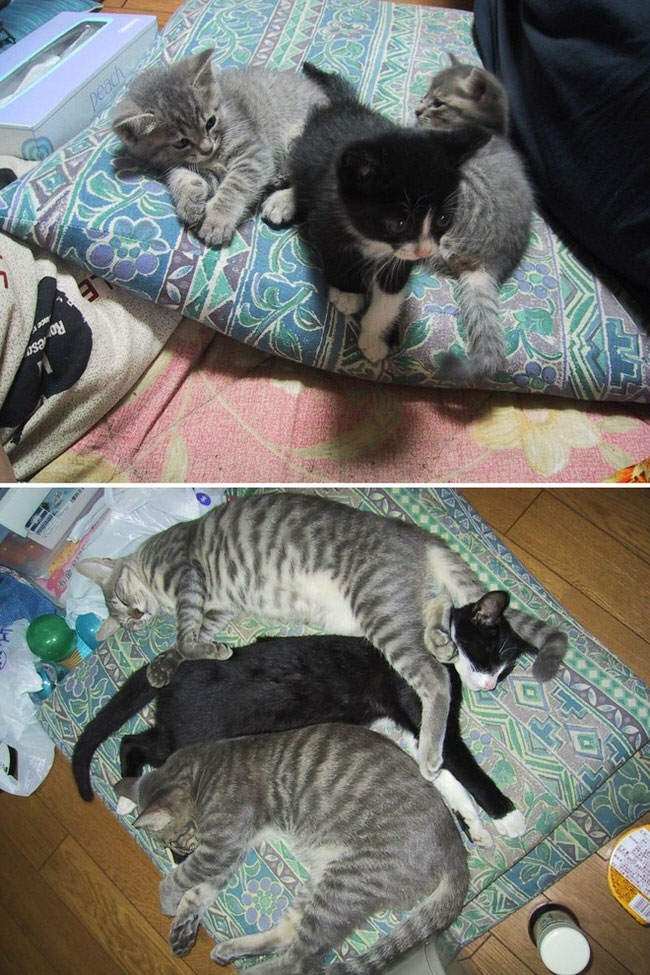 before-and-after-growing-up-cats-5