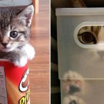 If These 40 Kitties Fit, They'll Certainly Sit
