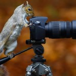 18 Animals That Seem To Be Taking Pictures With Cameras