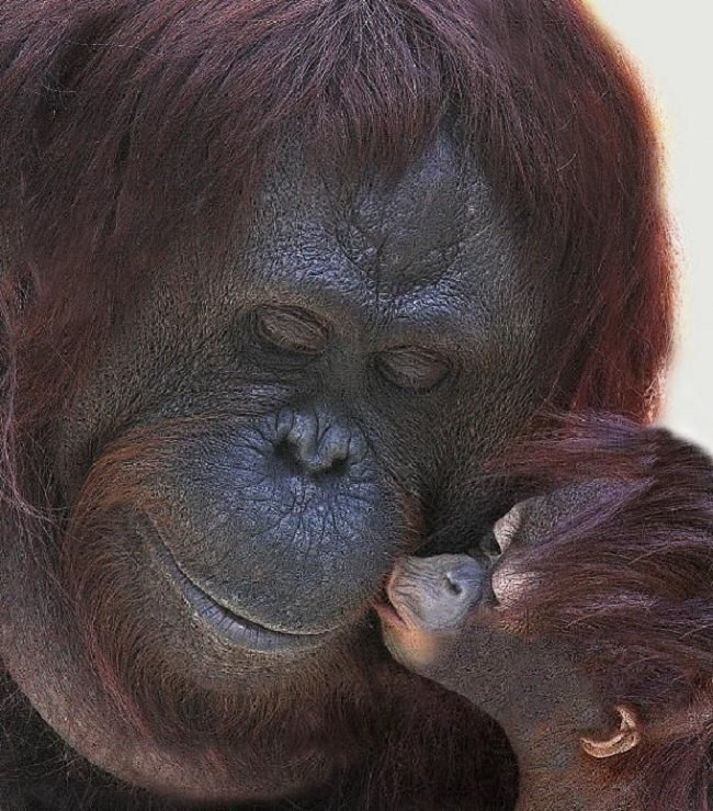 Of The Cutest Motherhood Moments In The Animal Kingdom - 22 adorable parenting moments in the animal kingdom