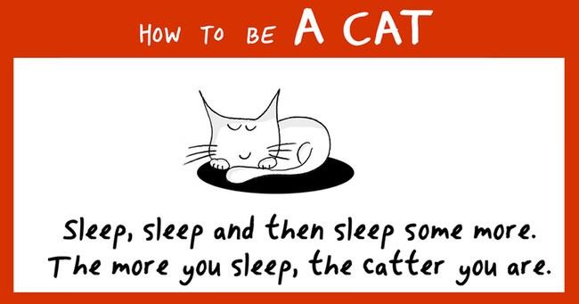 how-to-be-a-cat-funny-illustrations-cover