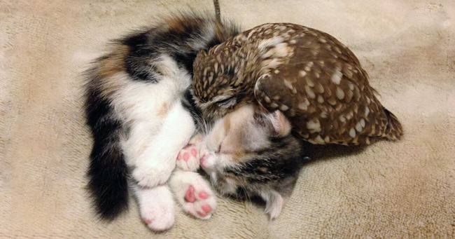kitten-owlet-adorable-friends-cover