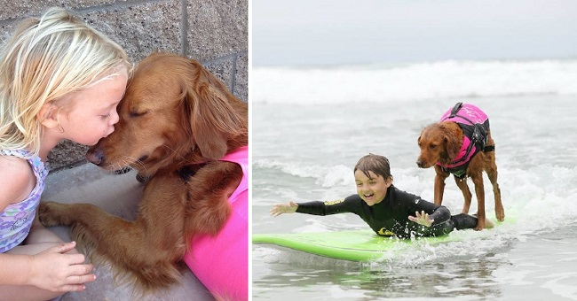ricochet-surf-therapy-dog-cover