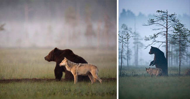 unusual-friendship-between-bear-and-wolf-cover