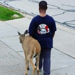10-Year-Old Boy Walks Blind Deer From One Grass Patch To Another To Help Her Find Food