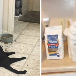 25 Funny Pictures That Demonstrate Cat Logic