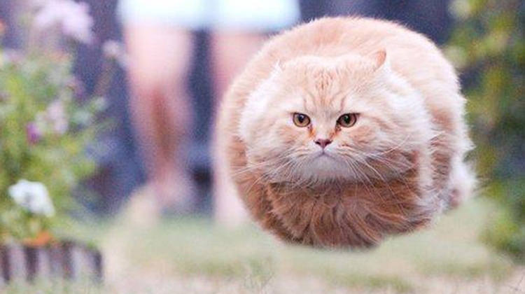 26 Funny Cat Pictures Taken At The Right Time