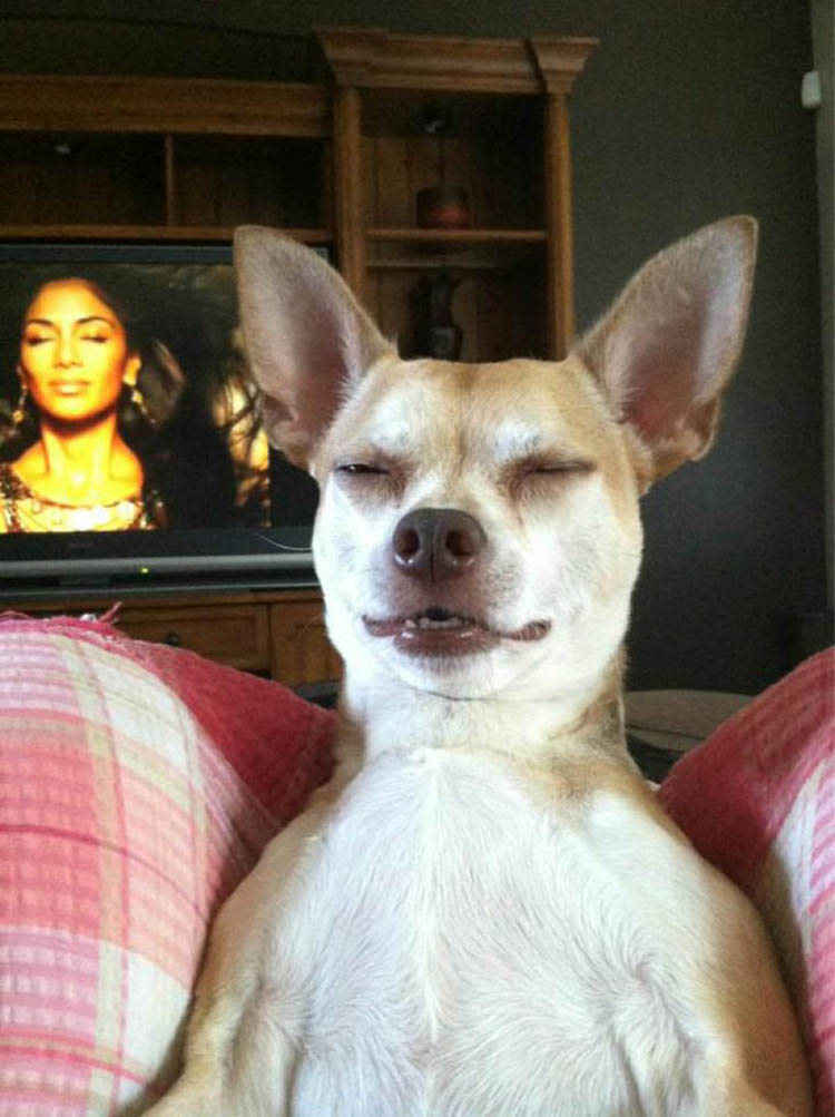 funny-dog-pictures-1