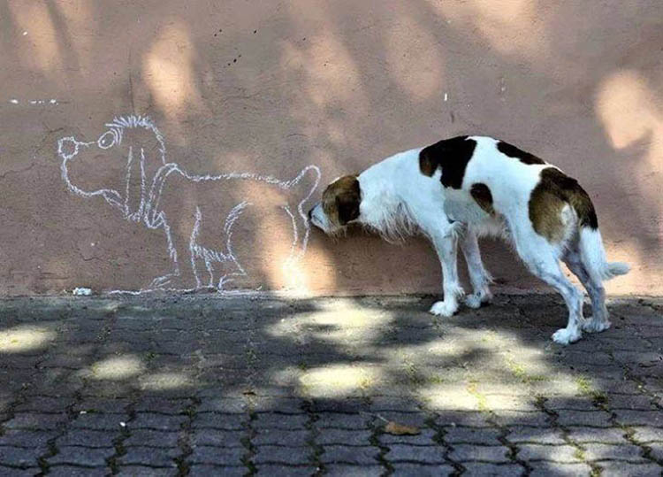 perfectly-timed-dog-pictures-3
