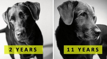 How Dogs Get Older: A Beautiful And Profoundly Emotional Photography Project