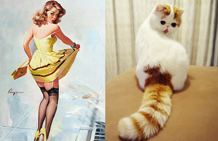 cats-paired-with-pin-up-girls-5