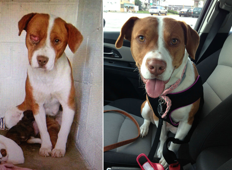 Before And After Pictures Show What Love Does To A Rescued Dog - 27 amazing transformations of dogs and cats before after adoption