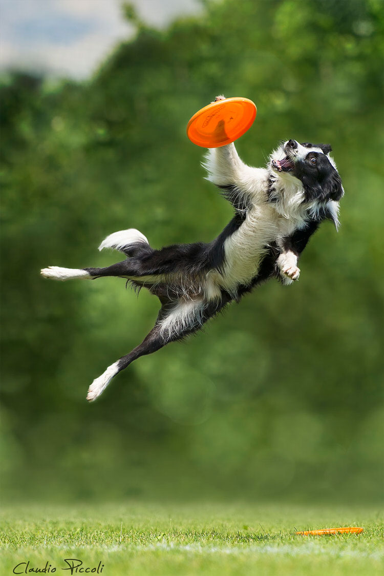 Photographer captures dogs in mid air jumping to catch for Best airline to fly dogs
