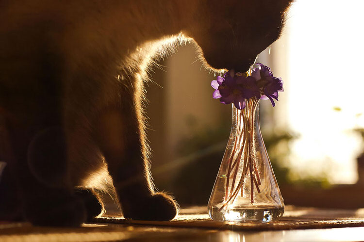 22 Adorable Animals Sniffing Flowers | Top13