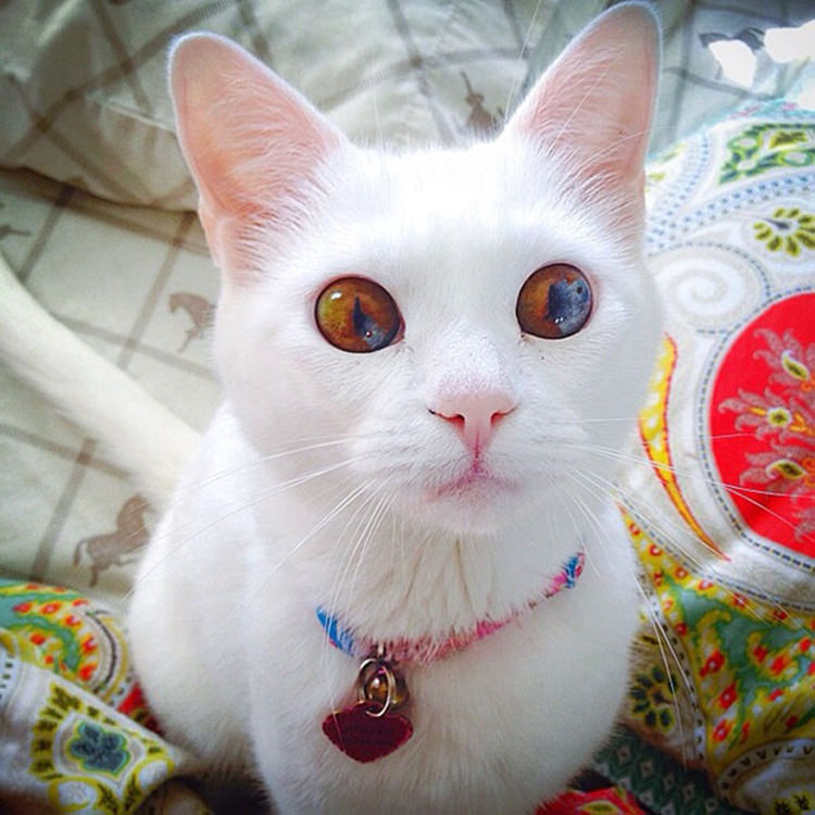 Multi Colored Cat Eyes