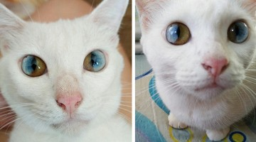 This Cat Has Incredibly Beautiful Eyes
