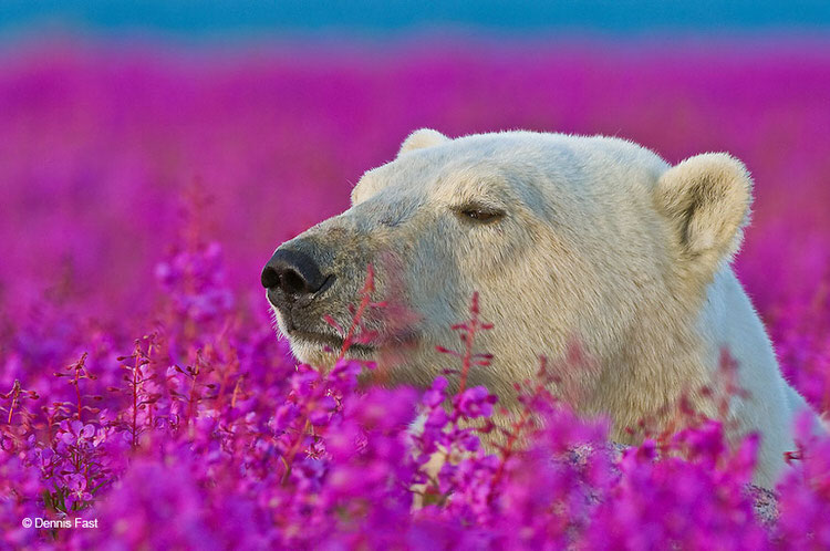 22 Adorable Animals Sniffing Flowers Top13