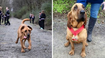 Dog Accidentally Runs Half-Marathon, Finishes In 7th Place