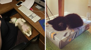 33 Animals Sleeping In Unusual Places And Positions