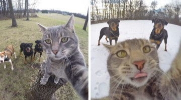 This Cat Learned To Take Selfies… And They're Awesome!