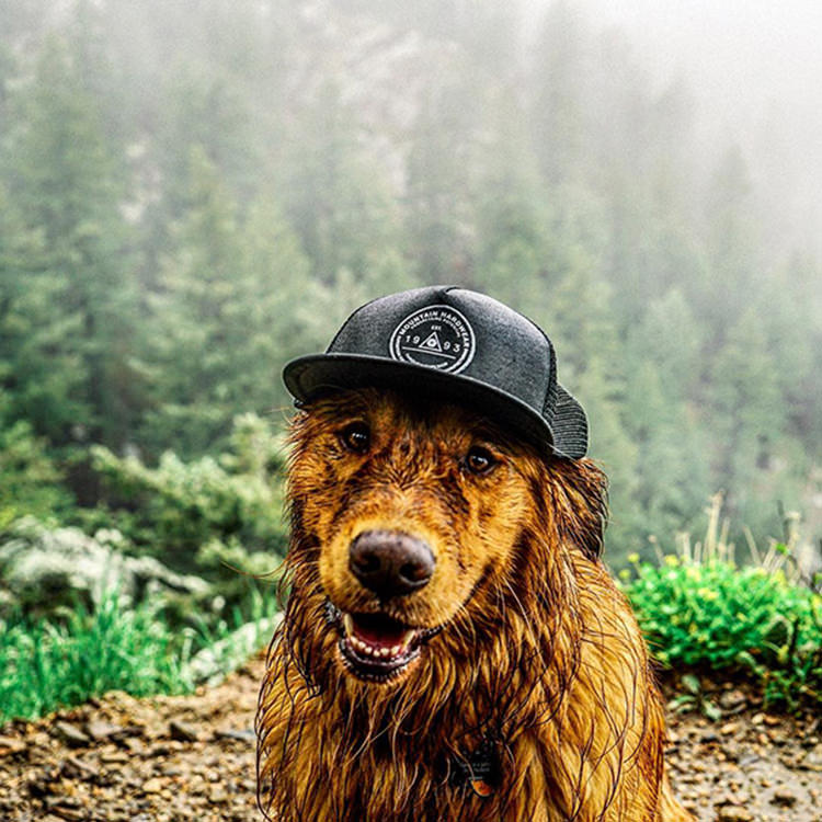 photographer-takes-dog-on-adventures-14