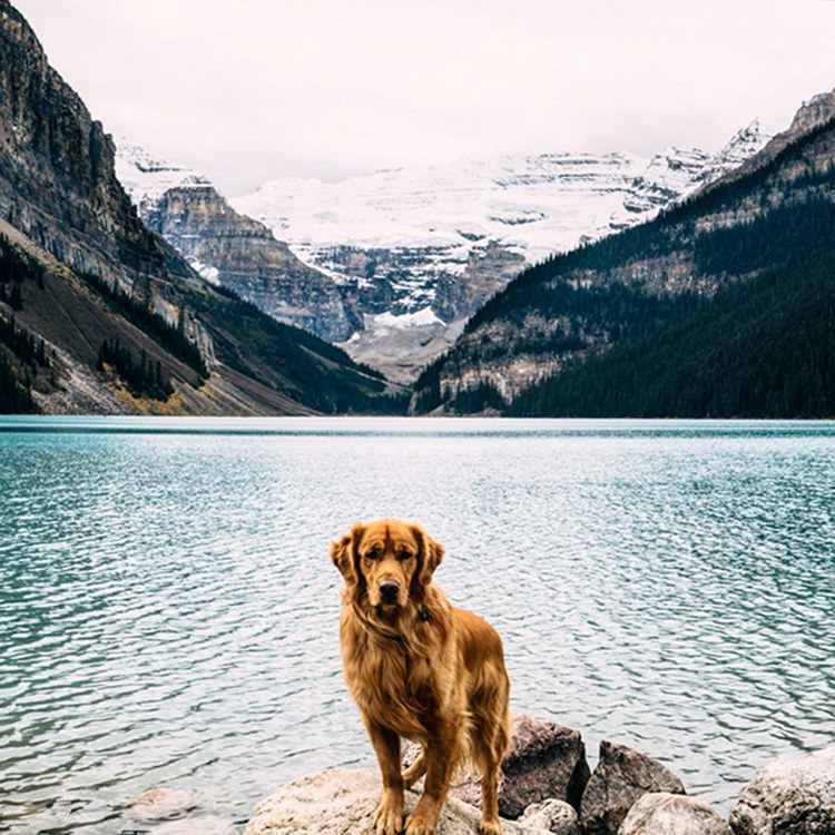 photographer-takes-dog-on-adventures-18