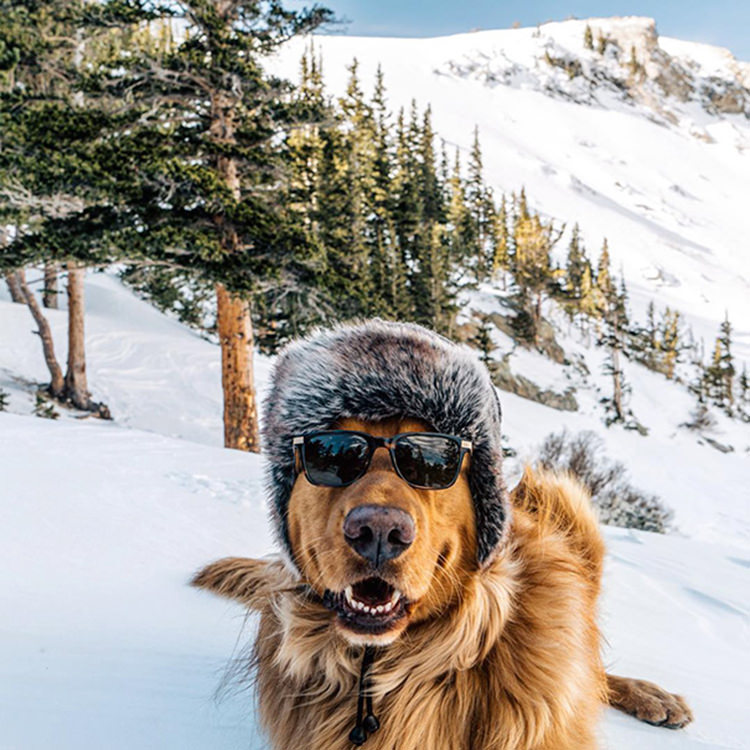 photographer-takes-dog-on-adventures-19
