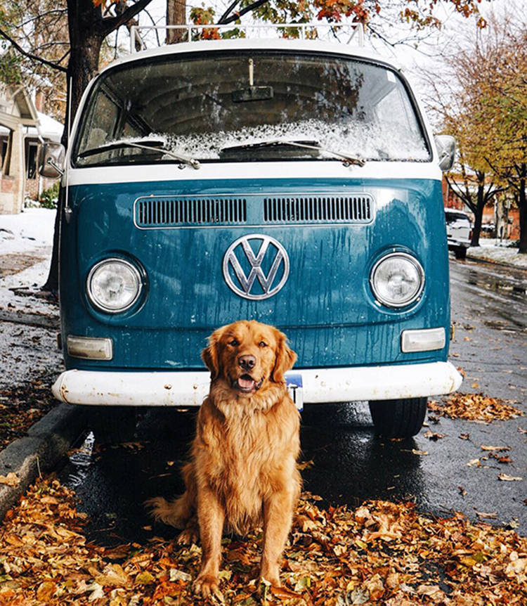 photographer-takes-dog-on-adventures-9