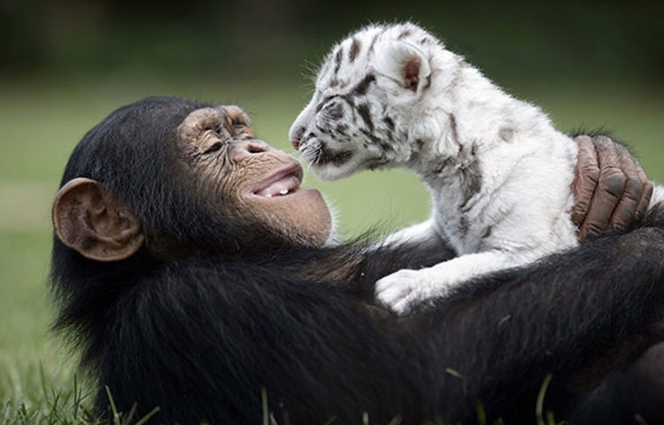 36 beautiful animal love pictures to celebrate valentines day top13 animal love 4 voltagebd Image collections
