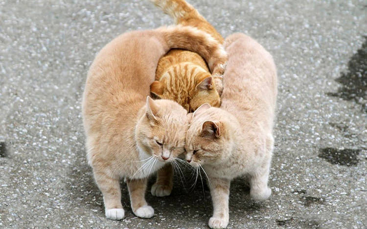 Views Animalsinlove2 Top13 36 Beautiful Animal Love Pictures To Celebrate Valentines Day Top13