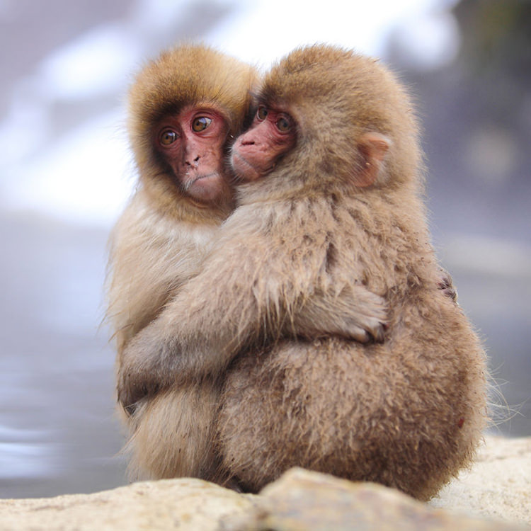Youtube Animalsinlove4 The Wall Street Journal 36 Beautiful Animal Love Pictures To Celebrate Valentines Day Top13